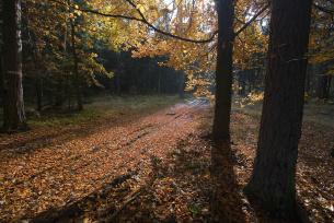 Las w okolicach Bliżyna