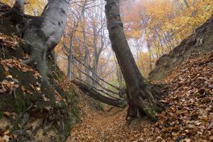 Wąwóz w rezerwacie Barania Góra