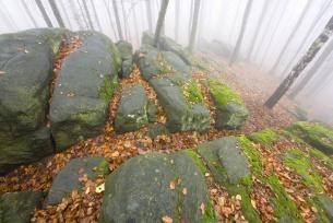 Pomnik Przyrody Skałki Piekło na Bukowej Górze