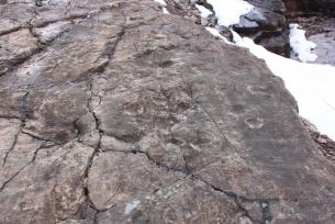 Ślady Tetrapoda w kamieniołomie Zachełmie k. Zagnańska
