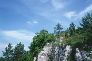 Rezrwat Góra Zelejowa k. Chęcin