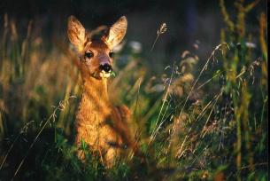 Fauna i flora woj. świętokrzyskiego