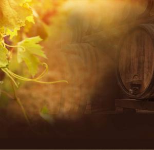 Winnica Milanowska - oferta zwiedzania