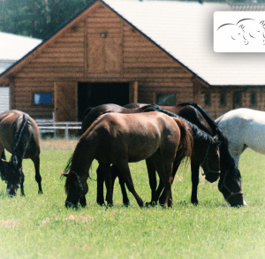 Ośrodek jeździecki BILCZA
