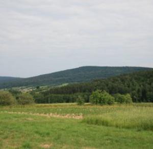 Cedzyna