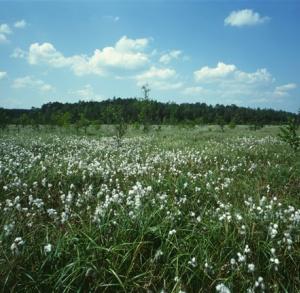 Poznajemy uroki Świętokrzyskiego Parku Narodowego – Na Chełmową Górę