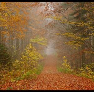 Przez Jeleniowski Park Krajobrazowy