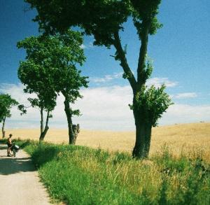 Szlaki piesze po Kielcach - żółty
